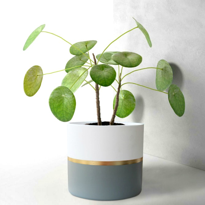 pots-&-planters